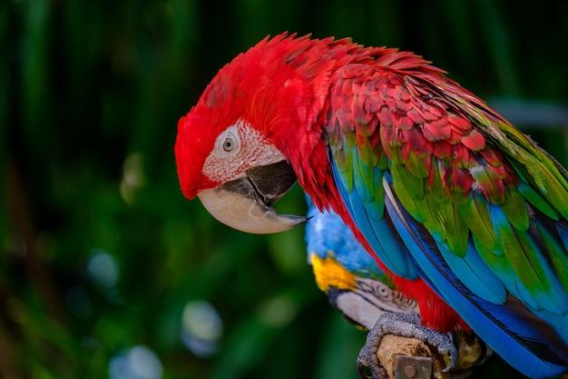 De kleurrijke papegaai.