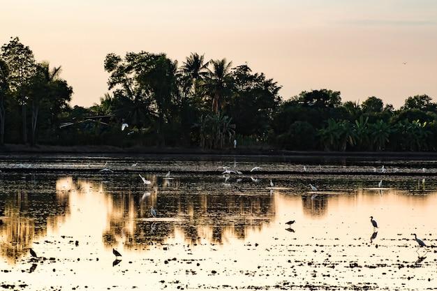 De kleurrijke zonsondergang bij het meer van de rivierbank met achtergrond van de de bezinning bosaard van vogelsilhouetten de mooie