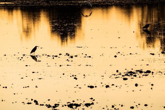 De kleurrijke zonsondergang bij het meer van de rivierbank met achtergrond van de de bezinningsaard van vogelsilhouetten de mooie
