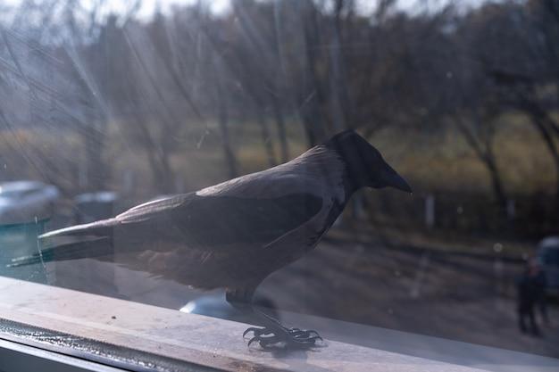 De kraai buiten het raam kijkt weg