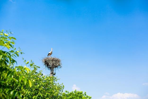 De kraan zit met een gehuil van zijn nest op de krachtoverbrengingspaal.