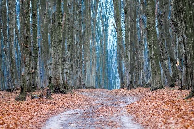 De kronkelende weg in het herfstbos met gevallen bladeren_