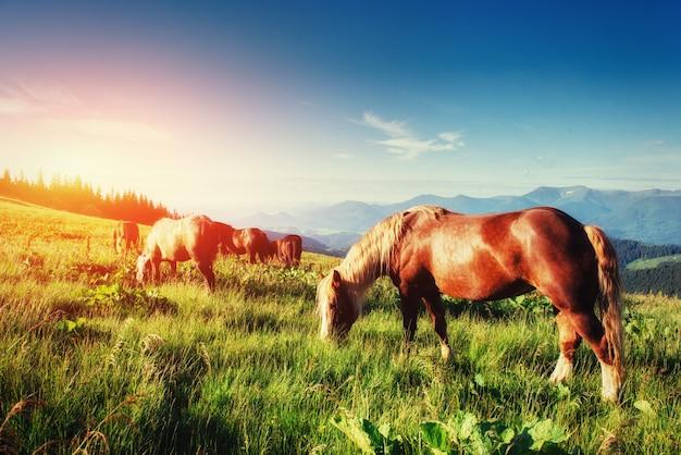 De kudde paarden in de bergen