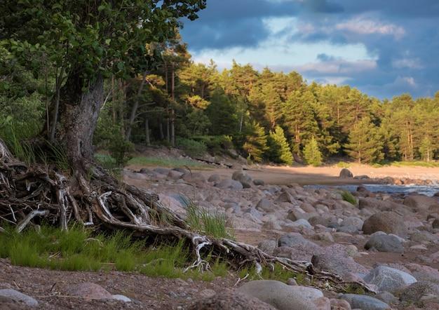 De kust van de golf van finland aan de oostzee bij zonsondergang