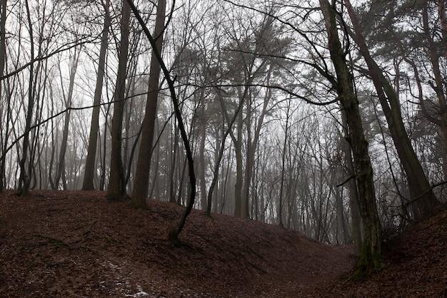 De laatste maanden van de herfst en het begin van de winter in een gemengd bos.