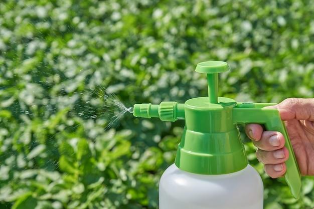 De landbouwer bespuit pesticide met handspuitbus tegen insecten op aardappelaanplanting in tuin in de zomer. landbouw en tuinieren concept