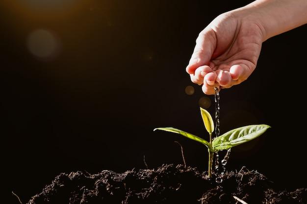 De landbouwers geven zaailingen op zwarte achtergrond water