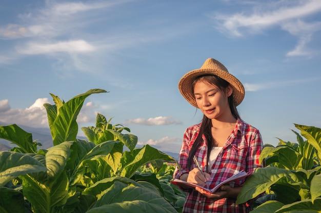 De landbouwers houden notitieboekjecontrole moderne tabaksgebieden.