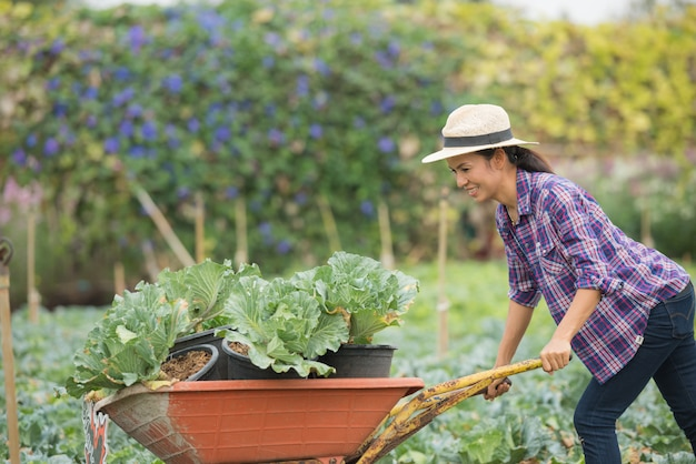 De landbouwers werken in plantaardige boerderij. kar