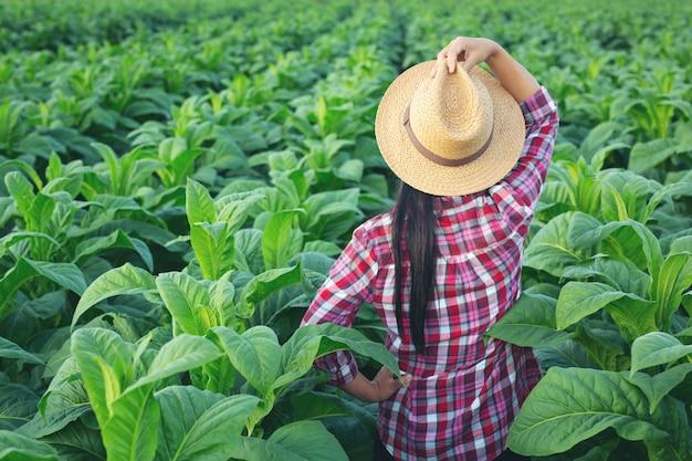 De landbouwkundigevrouw kijkt tabak op het gebied.