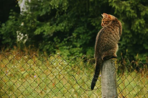 De landelijke kat zit in de herfst op een omheining