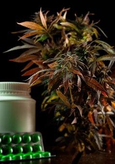 De legale teelt van cannabisplanten voor medische doeleinden voor de behandeling van marihuanabladeren