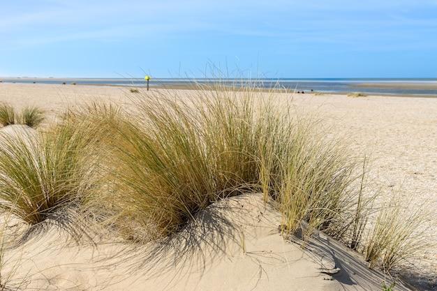 De lege stranden van de lente van 2020 # 1