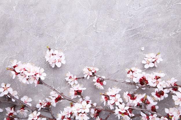 De lente bloeiende takken op een grijze concrete achtergrond.