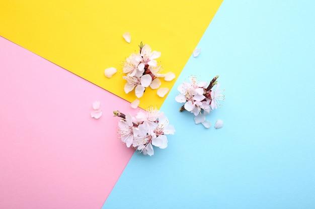 De lente bloeiende takken op een kleurrijke achtergrond.