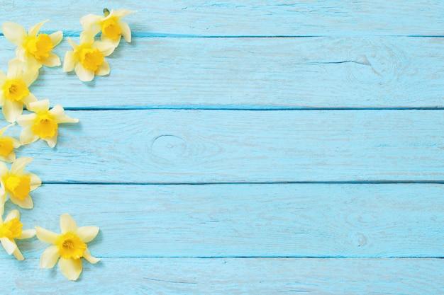 De lente gele narcissen op blauwe houten achtergrond