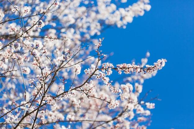 De lente witte bloesem tegen blauwe hemel