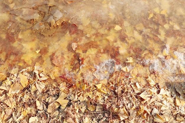 De lenteachtergrond met droge bladeren in de grond