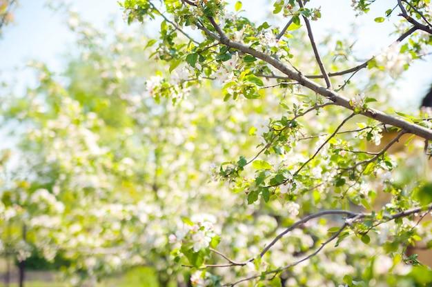 De lentekaart van een bloeiend tuinconcept. bloeiend bomenclose-up en exemplaarruimte.