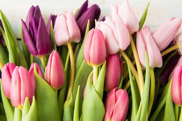 De lentetulpen die op witte houten lijstachtergrond liggen