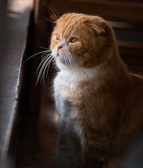 De leuke eenzame kat zit en kijkt naar buiten,