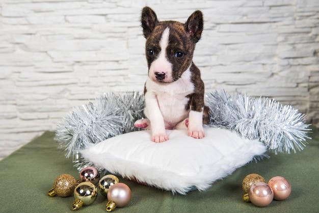 De leuke grappige gestroomde basenji-puppyhond zit op een wit pluizig hoofdkussen. winter kerstmis