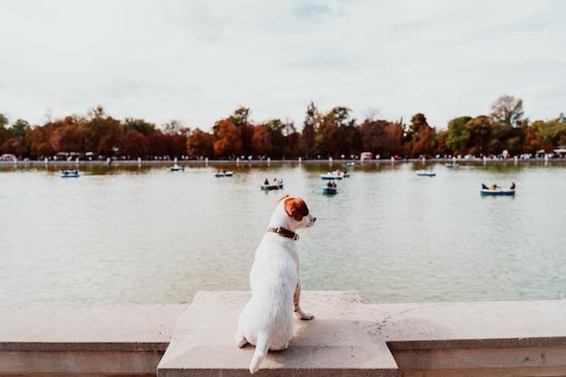 De leuke hond die van hefboomrussell zich door retiro-parkmeer bevinden in madrid. huisdieren buiten