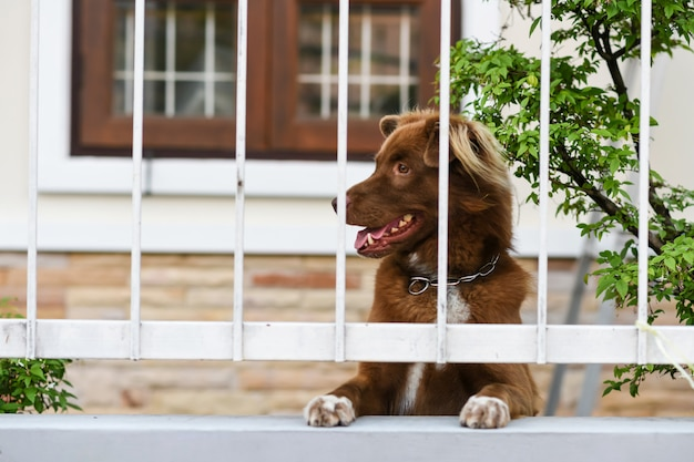 De leuke hond ziet eruit en wacht op eigenaar op omheining