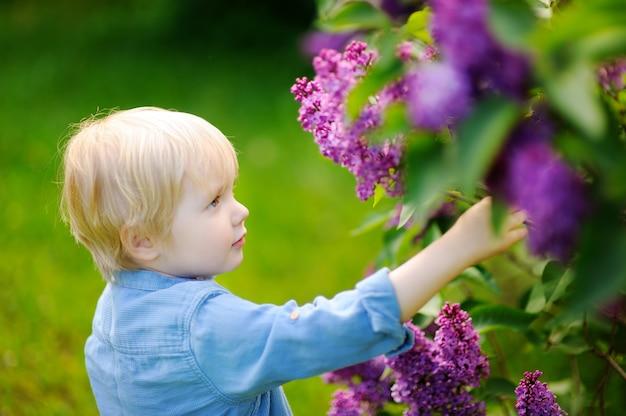 De leuke kleine jongen van het blondehaar geniet bloeiende sering in de binnenlandse tuin in warme dag