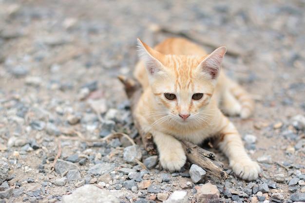 De leuke oranje gestreepte kat van het katje geniet van en ontspant op grondvloer met natuurlijk zonlicht