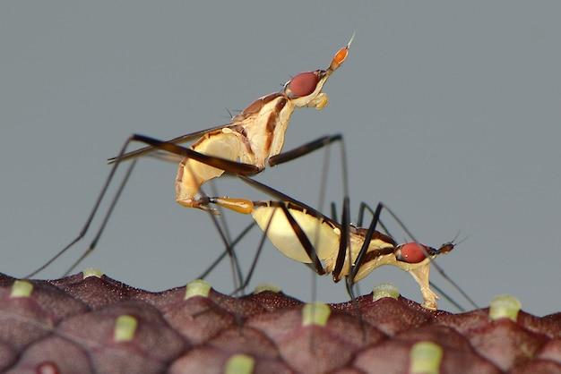 De liefde bedrijven insecten