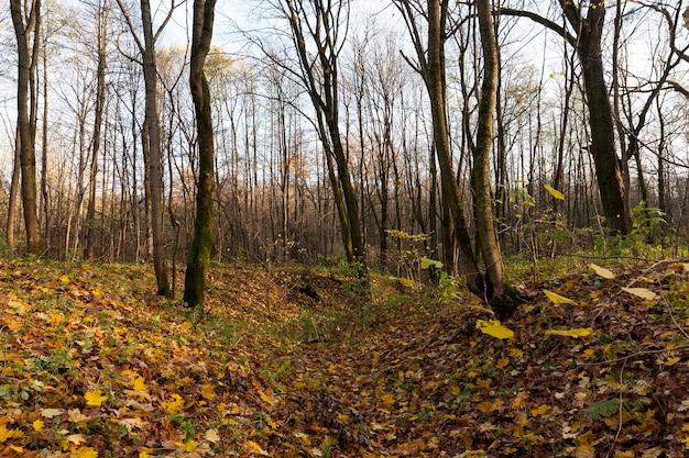 De lucht is een kaal dorp en gevallen bladeren op de grond in het herfstseizoen, laat in de herfst na bladval