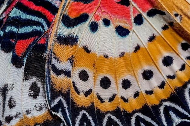 De luipaard lacewing-vleugel, de textuurachtergrond van het vlindervleugeldetail