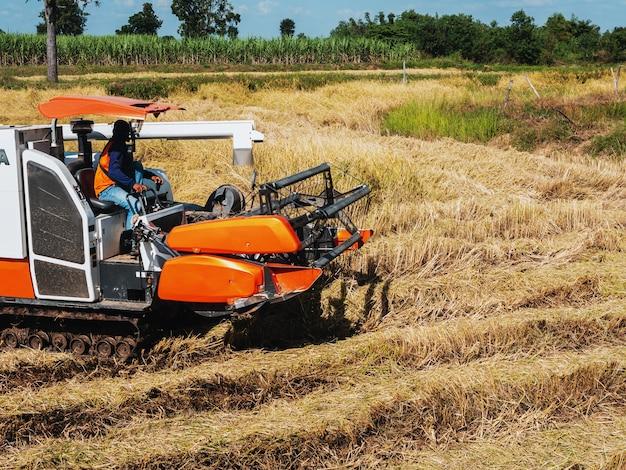 De maaidorser doet landbouwwerk in de velden.