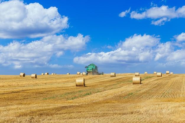 De maaidorser oogst rijpe tarwe in het graanveld landbouwwerk in de zomer
