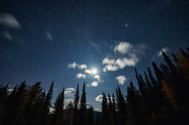 De maan met sterrenhemel in blauwe hemel op dennenbos