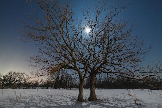 De maan schijnt door de takken van een boom tegen de achtergrond van de nachtelijke sterrenhemel in de winter.