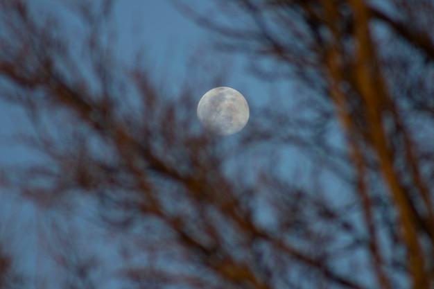 De maan staat achter de bomen
