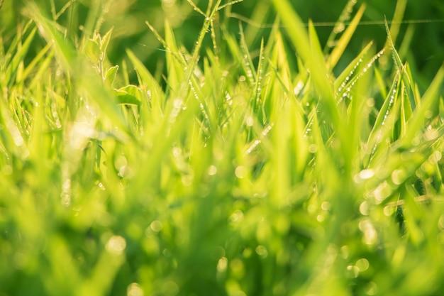 De macro van boombladeren voor aardachtergrond en bewaart groen concept