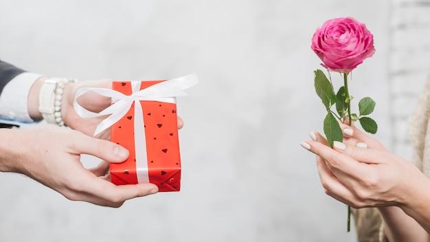 De man die van het gewas gift geeft aan vrouw met roos