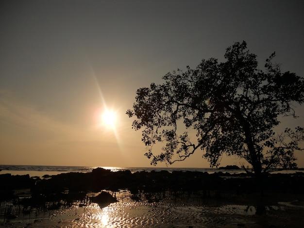De mangroveboom van het silhouet op tanjung gunung, belitung, indonesië