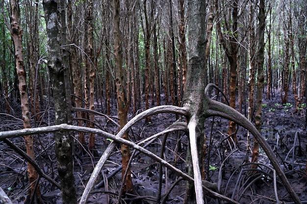 De mangroven op het meer, wortels mangrove bos in het regenwoud.