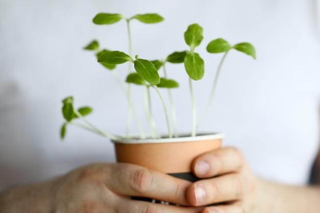 De mannelijke pot van de handgreep met groene spruitenclose-up.