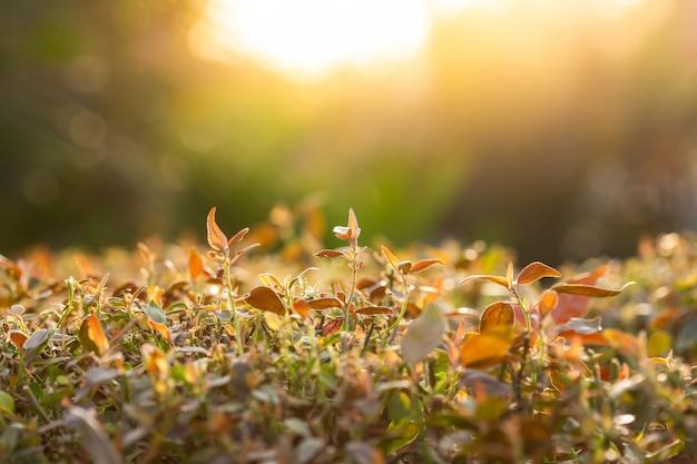 De mening van de close-upaard van geeloranje blad op vage achtergrond in tuin