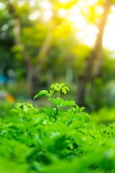 De mening van de close-upaard van groen blad op vage groenachtergrond in tuin
