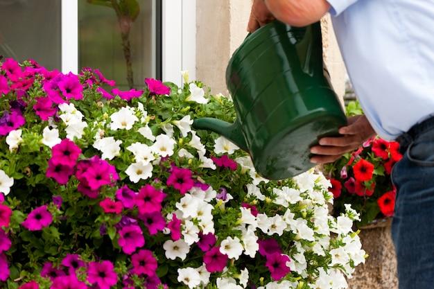De mens geeft bloemen water
