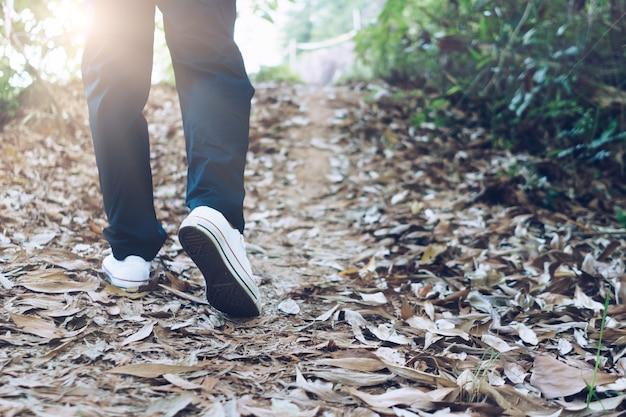 De mens loopt het bos of de jungle in, de natuurwandeling met zonlicht. slow life levensstijl en lichaamsbeweging.