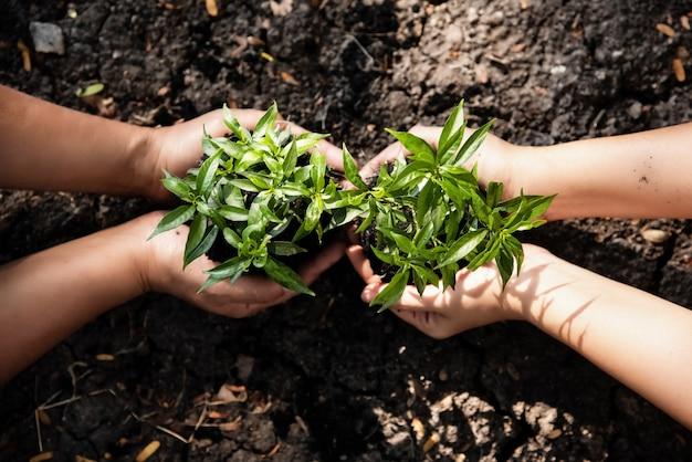 De menselijke hand die jonge plant samen houdt