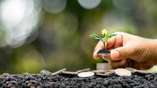 De menselijke hand houdt de munt vast, inclusief de groeiende boom op de munt, het idee van financiële groei door investeringen of rendement op zaken.