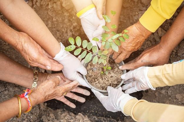 De mensen die de boom planten voor vieren koningsverjaardag van thailand